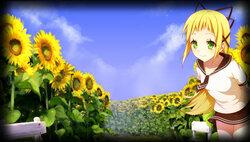 Garden of sunflowers (Фон профиля)