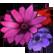 :Caligula_Flower: