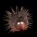 :HedgehogTRH: