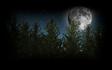 Moon over Greenwood