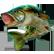 :pikefish:
