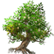 :tree: