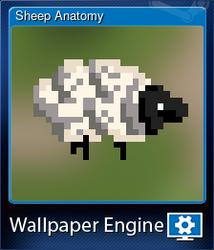 Sheep Anatomy