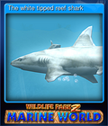 The white tipped reef shark