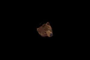 Nyanbear