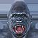 :gorillamountain: