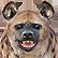 :hyenaspotted: