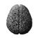 :Amigdala: