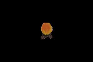 Tgbonfire