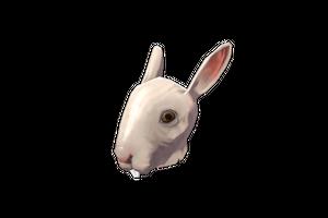 Haunted Horrific Head Of Hare