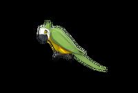 The Bird-Man of Aberdeen