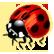 :ladybug: