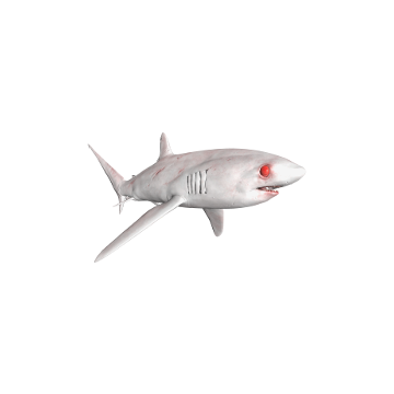 Thresher_ Shark _Skins
