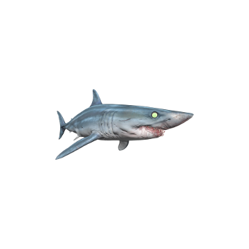 Mako_ Shark _Skins