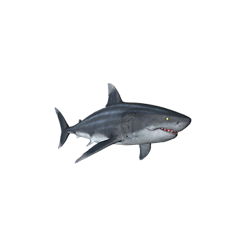 Great White_ Shark _Skins