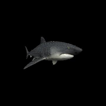 Tiger_ Shark _Skins